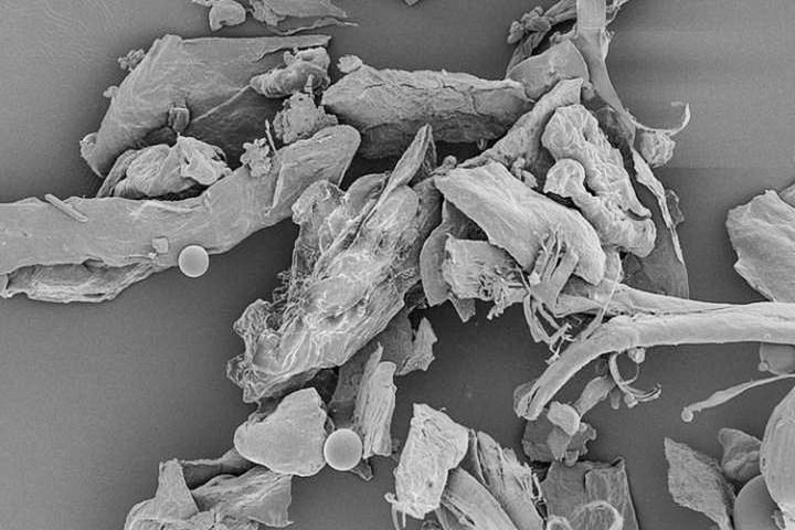 домашняя пыль фото под микроскопом